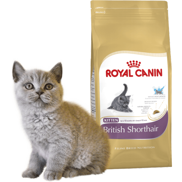 royal canin 4 kitten british shorthair. Black Bedroom Furniture Sets. Home Design Ideas